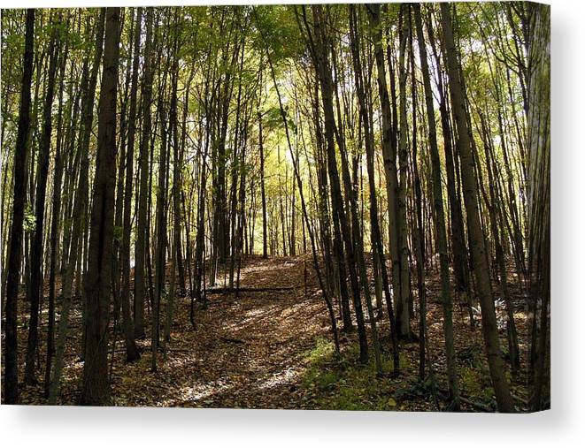 Woods Canvas Print featuring the photograph Into The Woods by Mindy Newman
