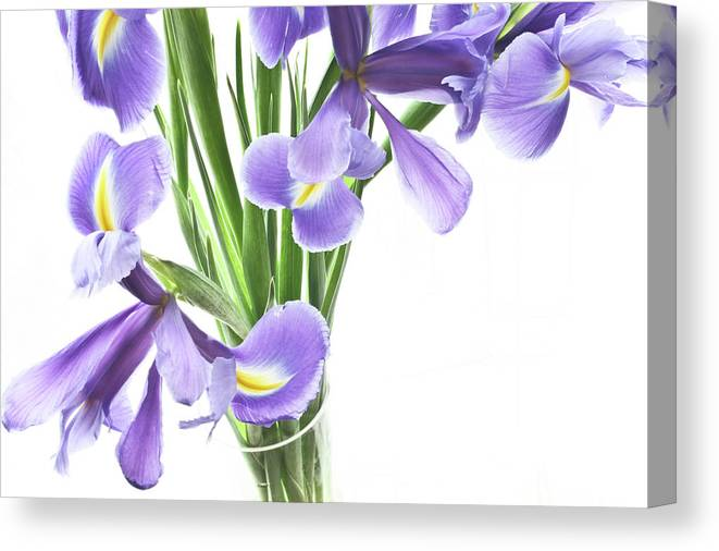 Iris Canvas Print featuring the photograph Iris In A Vase by Kathryn Goddard