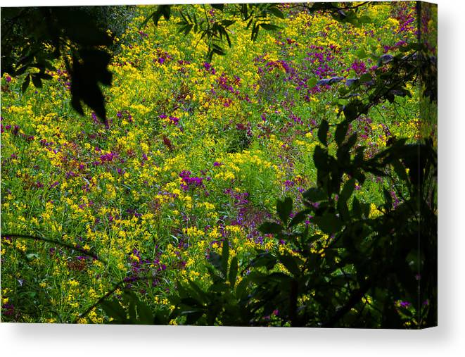 Nature Floral Wildflowers Canvas Print featuring the photograph Jackson County Wildflowers by George Ferrell