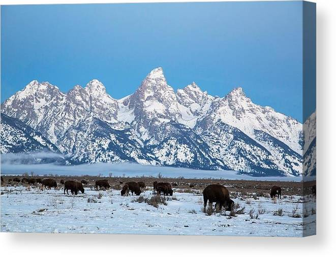 Jackson Hole The Grand Tetons Photography Shawn Hughes Canvas Print featuring the photograph Jackson Hole The Grand Tetons by Shawn Hughes