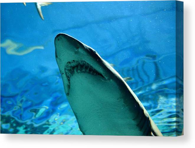 Animal Canvas Print featuring the photograph Jaws by Taras Bekhta