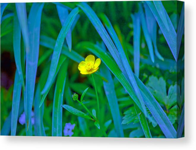 Flower Canvas Print featuring the photograph Jellow Flower by John Toxey