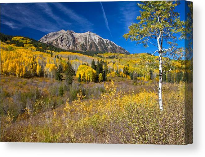 Altitude Canvas Print featuring the photograph Kebler Pass Gold by Crystal Garner