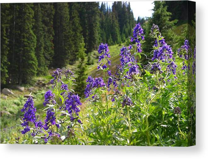 Larkspur Canvas Print featuring the photograph Larkspur Along Trail Ridge Road by Perspective Imagery