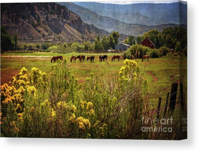 Horses Canvas Print featuring the photograph Last Summer Grass by Franz Zarda