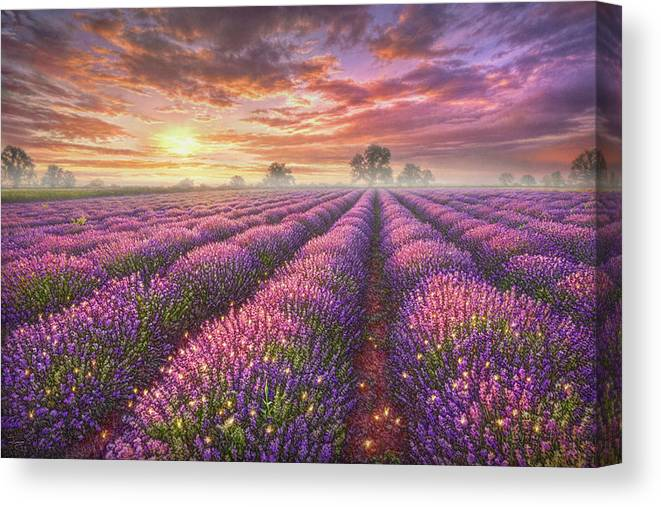 Lavender Canvas Print featuring the painting Lavender Field by Phil Jaeger