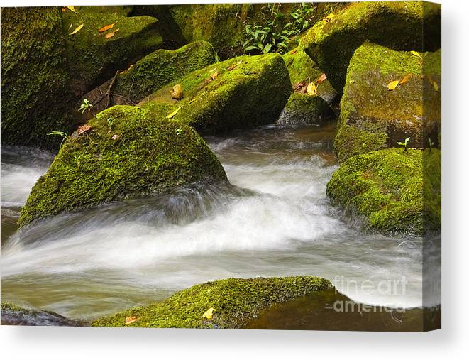 Living Canvas Print featuring the photograph Living Waters by Neil Doren