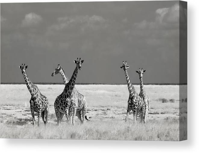 Nature Canvas Print featuring the photograph Look Girl Strange Animals by Mathilde Guillemot