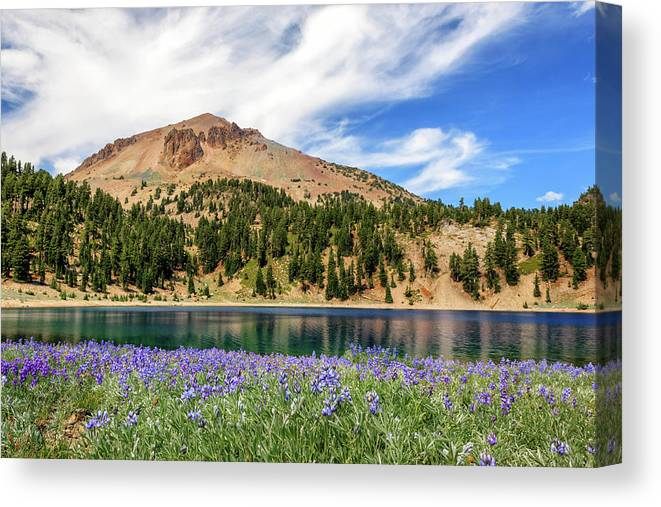 Mount Lassen Canvas Print featuring the photograph Lupines Lake And Lassen by James Eddy