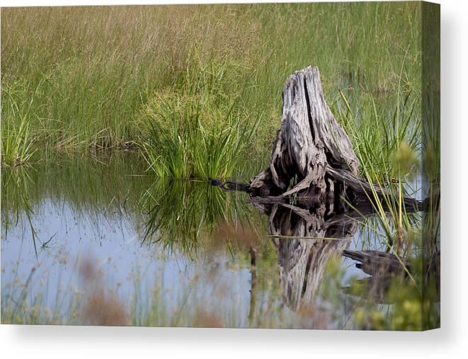Marsh Canvas Print featuring the photograph Marshland Reflections II by Tina B Hamilton
