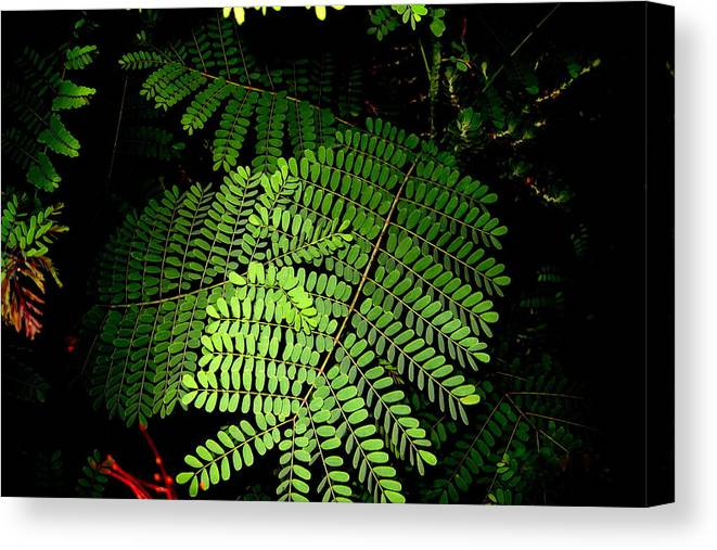 Fern Canvas Print featuring the photograph Mexican Bird Of Paradise by Lessandra Grimley