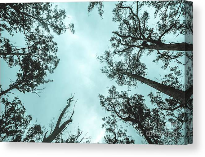 Canopy Canvas Print featuring the photograph Midnight Canopy by Jorgo Photography - Wall Art Gallery
