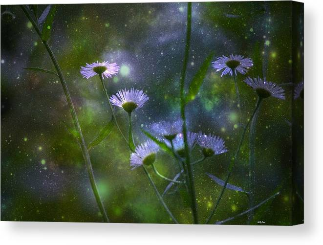 Night Canvas Print featuring the photograph Midsummer Night by Molly Dean