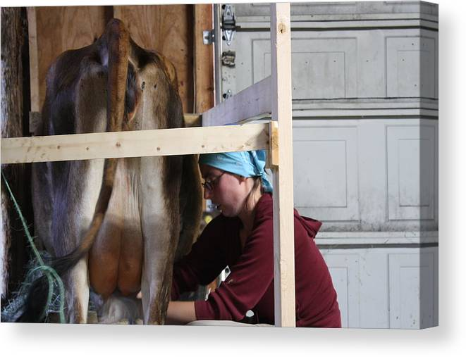 Milking Cow Canvas Print featuring the photograph Milking Time by Rachael Bliss