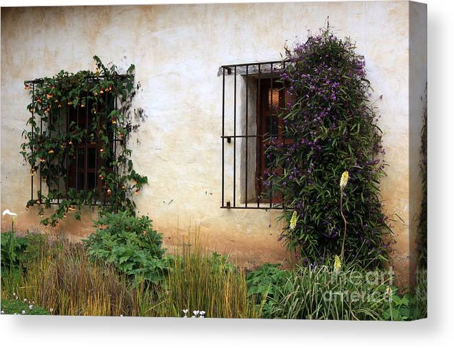 Vines Canvas Print featuring the photograph Mission Windows by Carol Groenen