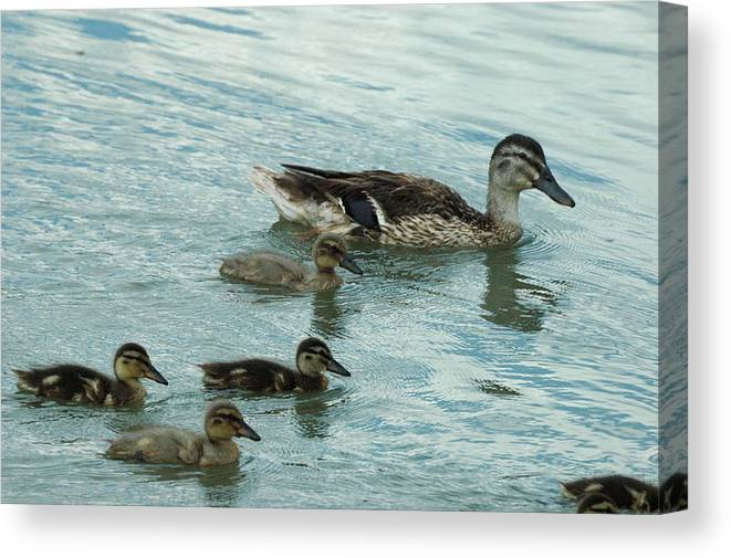 Bird Canvas Print featuring the photograph Mom And Babies by Teresa Blanton
