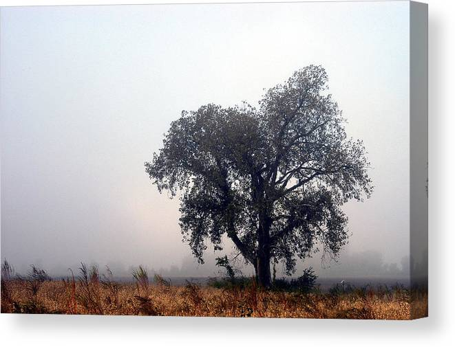 Fog Canvas Print featuring the photograph Morning Fog - The Delta by D'Arcy Evans