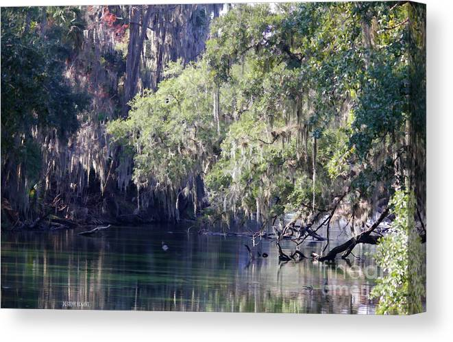 Trees Canvas Print featuring the photograph Moss At Blue Springs by Deborah Benoit
