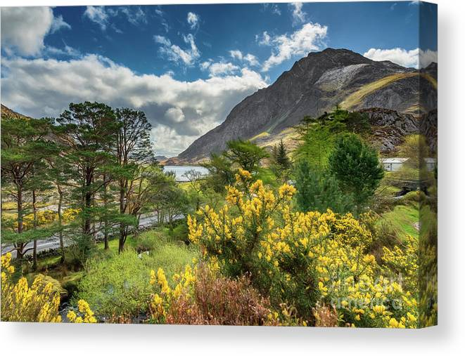 Mountain Flora Canvas Print featuring the photograph Mountain Flora by Adrian Evans