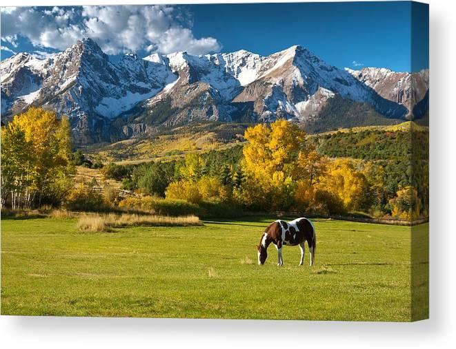 Colorado Canvas Print featuring the photograph Mountain Horse by Peter Kunasz