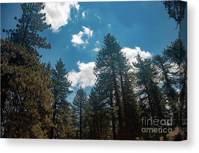 Landscape Canvas Print featuring the photograph Mt. Pinos by Reema Hammad