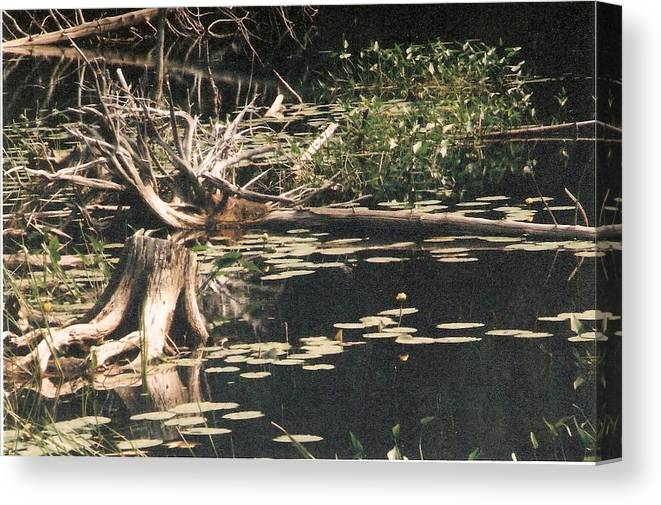Lake Canvas Print featuring the photograph Mud Lake Landscape - Photograph by Jackie Mueller-Jones