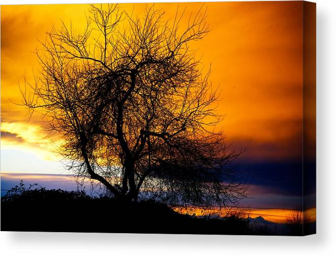 Tree Canvas Print featuring the photograph Naked Tree by Paul Kloschinsky