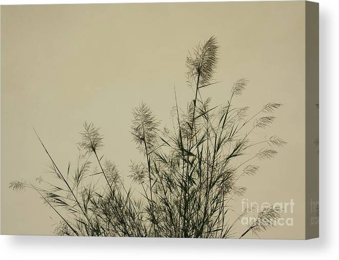 Nature Canvas Print featuring the photograph Nature Scenery In Lijiang China by Julia Hiebaum