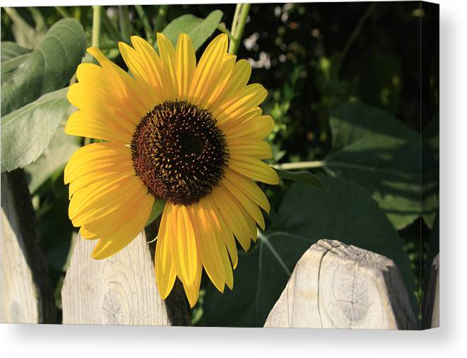 Flowers Canvas Print featuring the photograph Neighborly Advance by Alan Rutherford