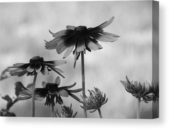 Flowers Canvas Print featuring the photograph New And Old by Paula Coley