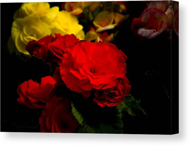 Begonia Canvas Print featuring the photograph Night Begonias Five by John Ater