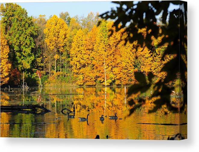 Geese Canvas Print featuring the photograph On Golden Pond 2 by David Arment