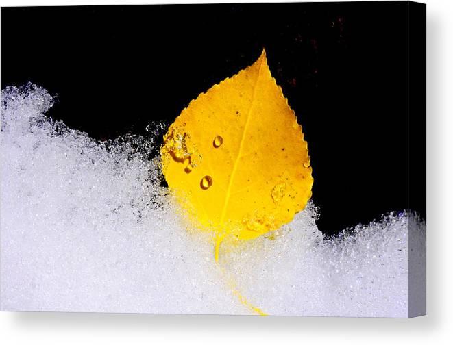 Icy Canvas Print featuring the photograph On Ice by The Forests Edge Photography - Diane Sandoval