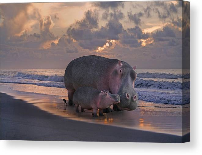 Hippo Canvas Print featuring the digital art Only On Topsail The Best Kept Secret by Betsy Knapp