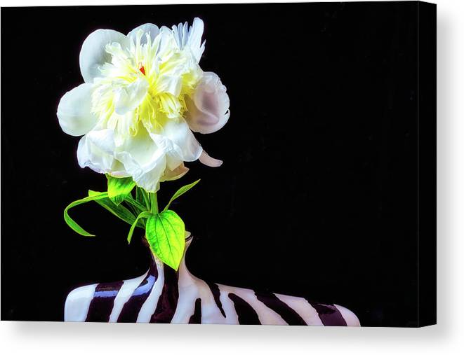 Peony's Canvas Print featuring the photograph Opened Peony by Garry Gay