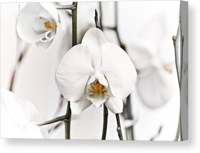Floral Canvas Print featuring the photograph Orchids by John Ater