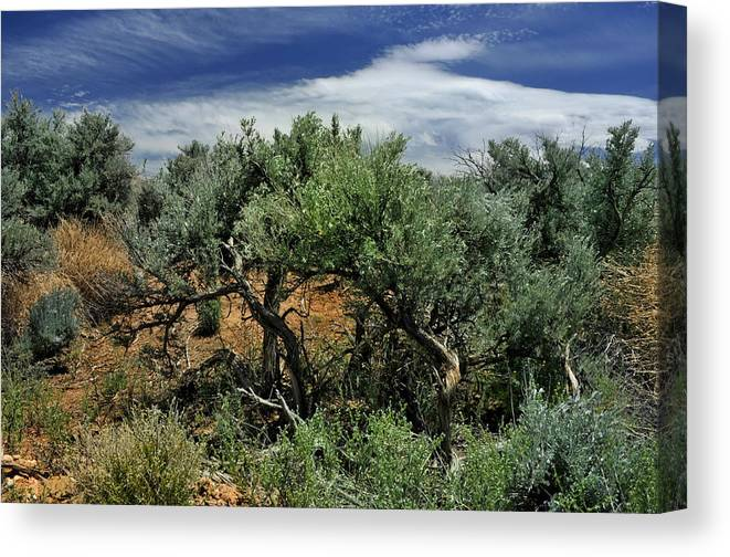 Landscape Canvas Print featuring the photograph Out On The Mesa 3 by Ron Cline