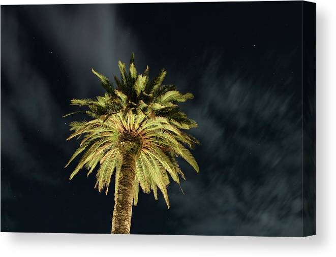 Palm Tree Canvas Print featuring the photograph Palm Tree by Brian Middleton