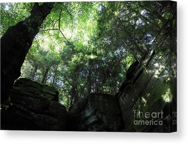 Nature Canvas Print featuring the photograph Peace All Around by Amanda Barcon
