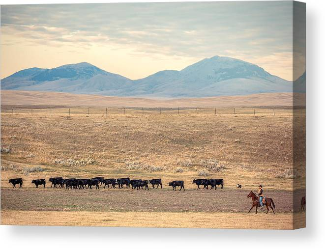Cattle Canvas Print featuring the photograph People's Creek Push by Todd Klassy