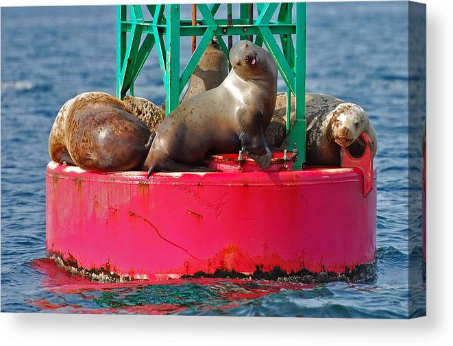 Seals Canvas Print featuring the photograph Pffft by Faye Bryant