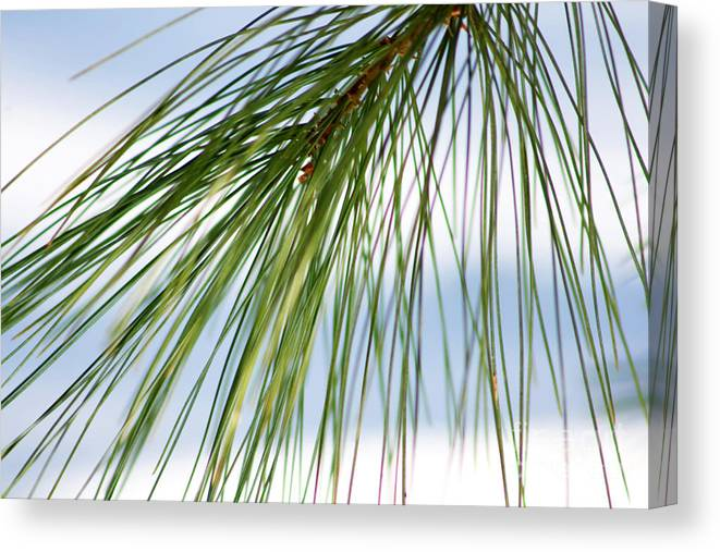 Nature Canvas Print featuring the photograph Pine Needles Series 3 by Robin Lynne Schwind
