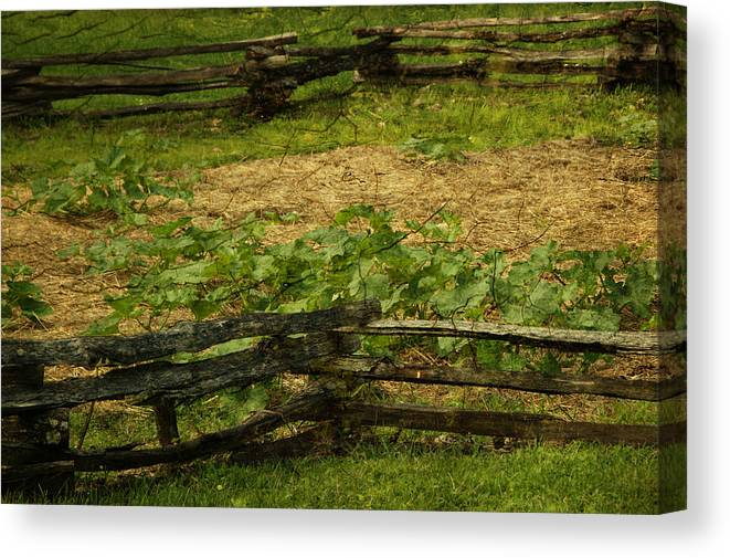 Fence Canvas Print featuring the photograph Pioneer Gardening by Tingy Wende