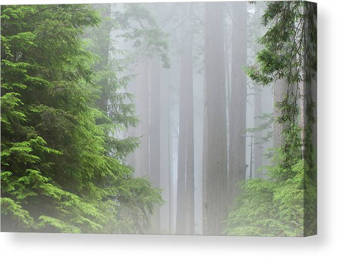 Redwoods Canvas Print featuring the photograph Prairie Creek State Park by Dean Pennala