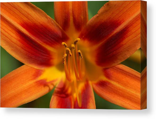 Nature Canvas Print featuring the photograph Precious Treasure by Mandy Wiltse