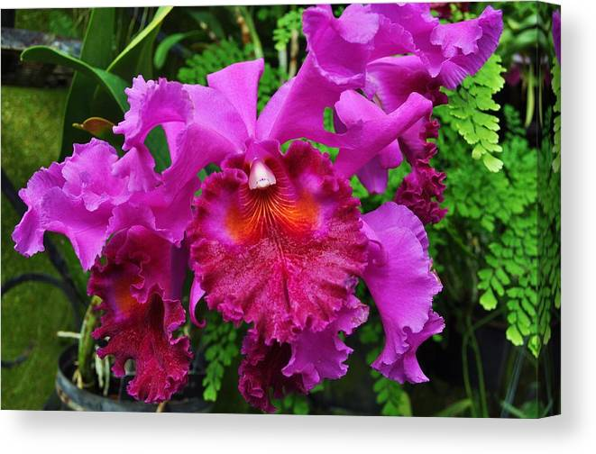 Floral Canvas Print featuring the photograph Purple Orchid by Andrea Everhard