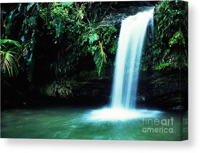 Puerto Rico Canvas Print featuring the photograph Quebrada Juan Diego Waterfall Mirror Image by Thomas R Fletcher