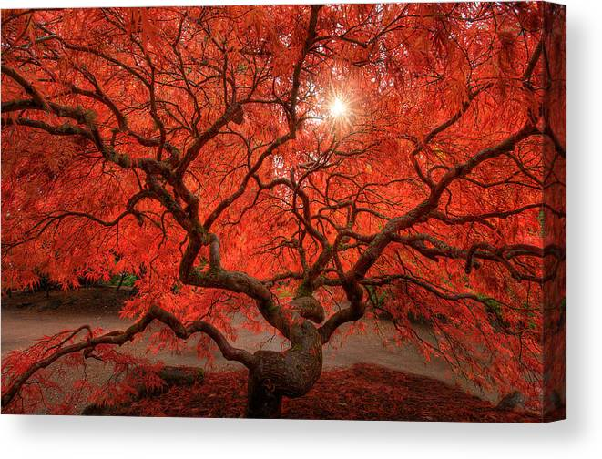 Fall Canvas Print featuring the photograph Red Lace by Dan Mihai