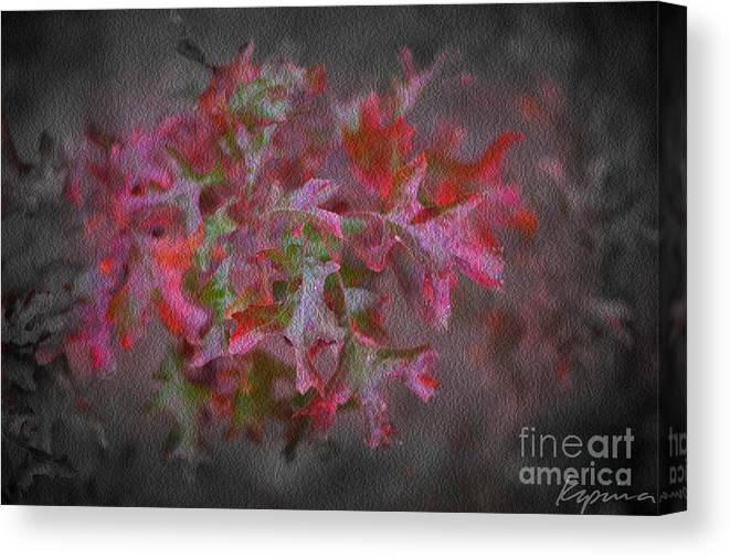 Red Oak Canvas Print featuring the photograph Red Oak Leaves, Grapevine Texas by Greg Kopriva