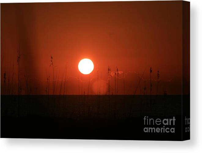 Sunset Canvas Print featuring the photograph Red Sunset And Grasses by Nadine Rippelmeyer